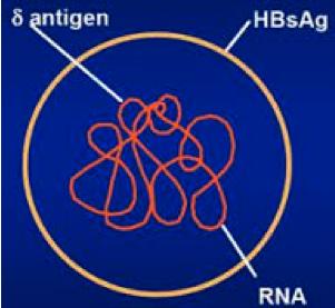 hepatite_dr_eduardo_ramos_18_a